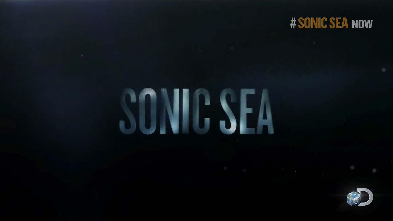 """Sonic Sea"" Petition: #StopOceanNoise Movement"